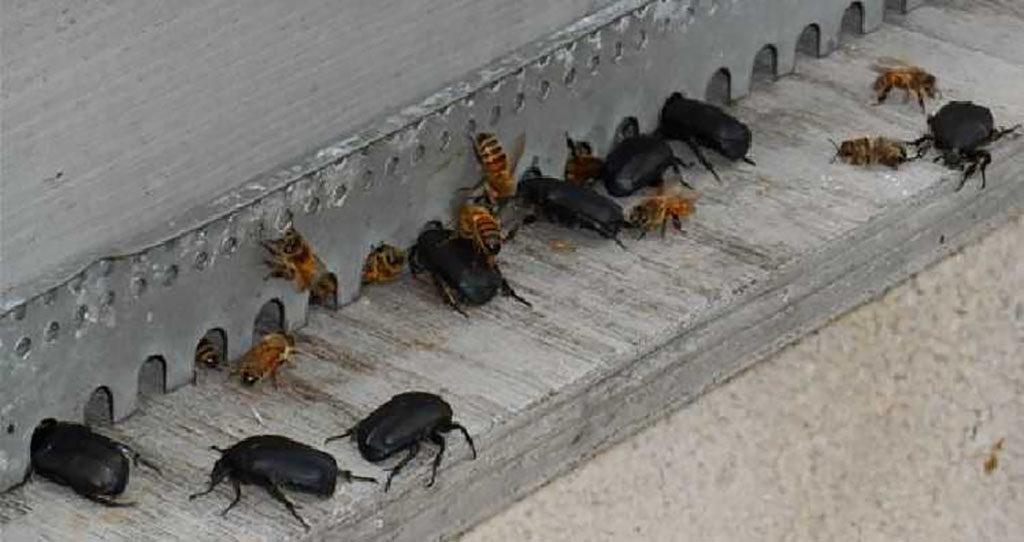 miellerie cétoines entrée ruche
