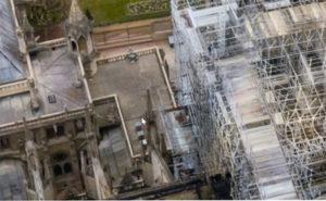 ruches sur la cathédrale de paris